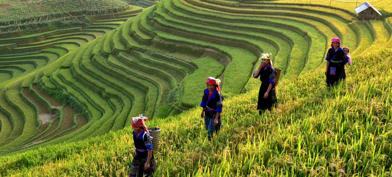 Three women working the rice terraces in Sapa, Vietnam