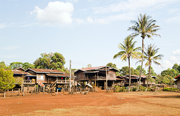 Coffee Plantation on the Bolaven Plateau